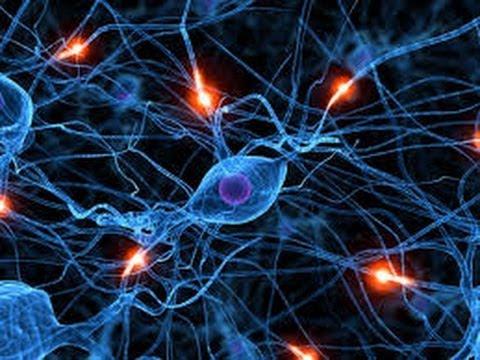 Neurological (nervous system) problems.